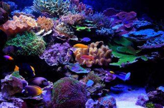 alt=морской аквариум