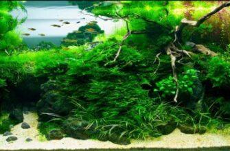 Дизайн и оформление аквариума