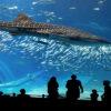 Видео самый большой аквариум в мире