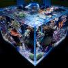 Фото морской аквариум