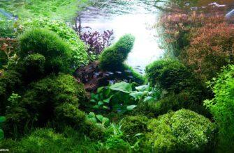 alt=аквариум лучшие работы 2014