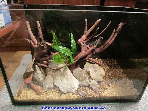 alt=растение аквариумное в нано аквариуме