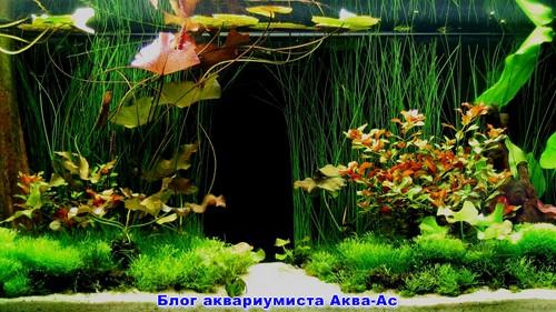 alt-вода для аквариума