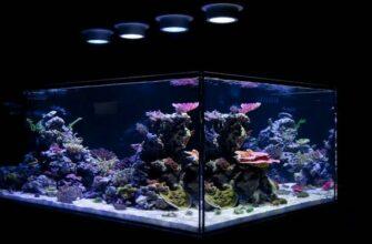 Виды ламп для аквариумного освещения