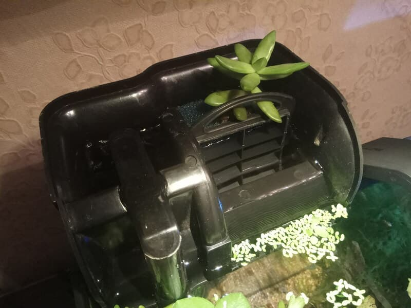 JEBO 503 BF с растением